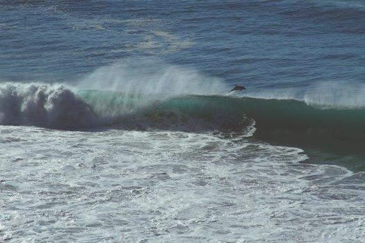 Dolphin jumping.jpg